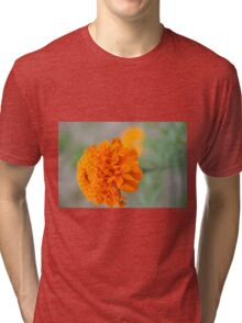 Chrysanthemum flowers Tri-blend T-Shirt