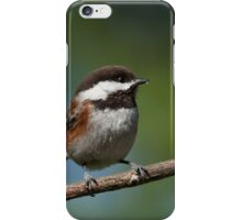 Chestnut Backed Chickadee Perched on a Branch iPhone Case/Skin