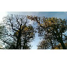Vienna trees autumn Photographic Print