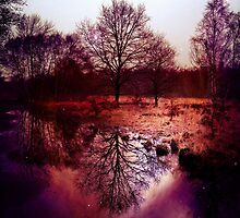 Tree Reflection by Ludwig Wagner