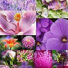 4 Seasons - Summer, 4 Jahreszeiten - Sommer by Martina Cross