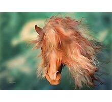 A horse called Copper'... Photographic Print