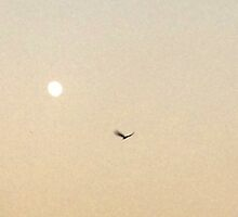 An Early Evening Moon by Ushna Sardar