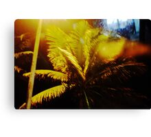 A Night in Brazil Canvas Print