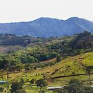 How green was my Costa Rican valley by Jim Cumming