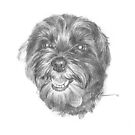 black havanese dog drawing by Mike Theuer