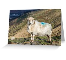 An Aware Sheep Greeting Card