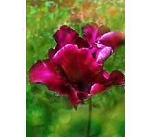 Very especial tulip Photographic Print