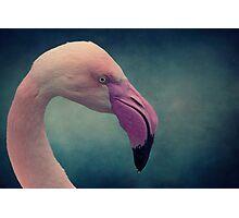Pink Lady Photographic Print