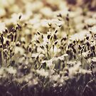 Vintage Meadow by KatMagic Photography