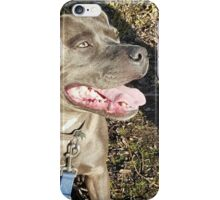 Marley sits in the sun iPhone Case/Skin