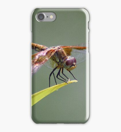 Goggles On, Flaps Down.... iPhone Case/Skin