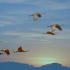 Winging Into The Sunset by MaeBelle