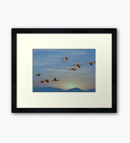 Winging Into The Sunset Framed Print