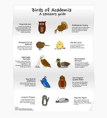 Birds of academia, a spotters guide Poster