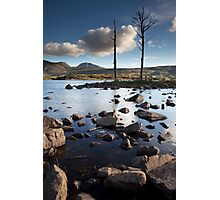 dead trees, loch assynt Photographic Print