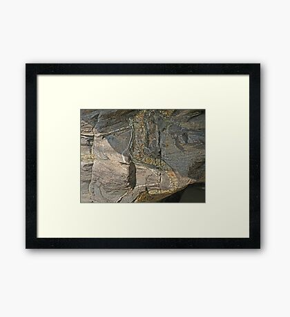 Rock Reptile Framed Print