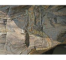 Rock Reptile Photographic Print