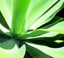 Succulent Agave Art by Sharon Cummings Sticker