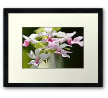 Delicate Orchids by Sharon Cummings Framed Print