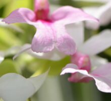 Delicate Orchids by Sharon Cummings Sticker