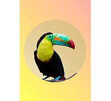 Toucan-polygonal style   Photographic Print