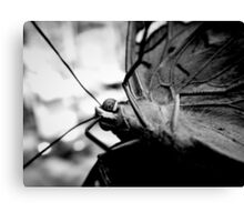Butterfly On Camera Lens Canvas Print