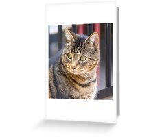 Jimmy, My Cat, Australia. Greeting Card