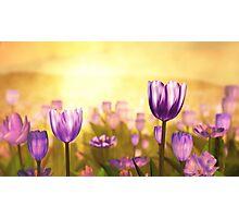 Purple Jubilee Photographic Print