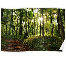 North Country Trail Forest Poster