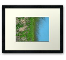Fifty-fifty Framed Print
