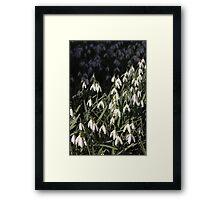 Snow Drops - spring vanguard Framed Print