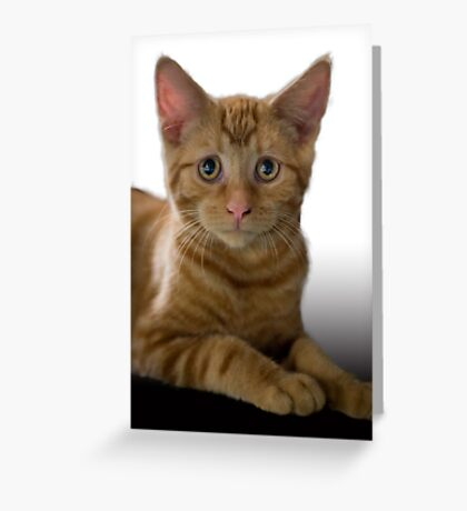 Concerned Kitten Greeting Card