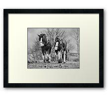 Working horses Framed Print