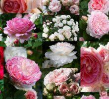 Englische Rosen Collage - English Roses Collage Sticker