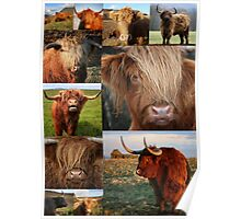Highlander - Highland Cows - Highland Cattle - Hairy Coo Poster
