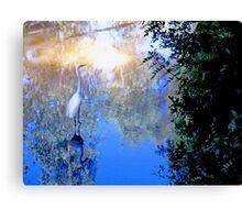 The water bird Canvas Print