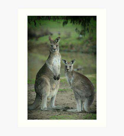 Kangaroos - 2413 Art Print