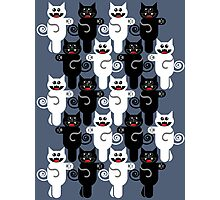 MARCHING CATS Photographic Print