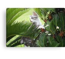 Kitten and cycad Canvas Print