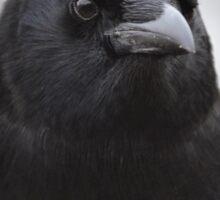 Mother Crow Sticker