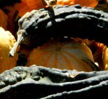 Autumn Gourds   ^ Sticker