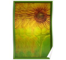Growing Sunflower Poster