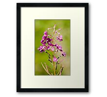 Wild Rocky Mountain Flowers Framed Print