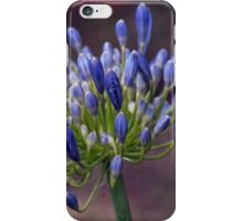Agapanthus blooms Leith Park Victoria 20151202 0779  iPhone Case/Skin