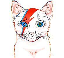 cat light Photographic Print