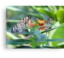 Butterfly Community Canvas Print