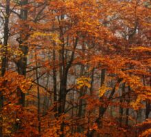 Red orange leaves forest fall color photo Sticker