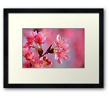Plum Blossom 2 Framed Print