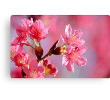 Plum Blossom 2 Canvas Print